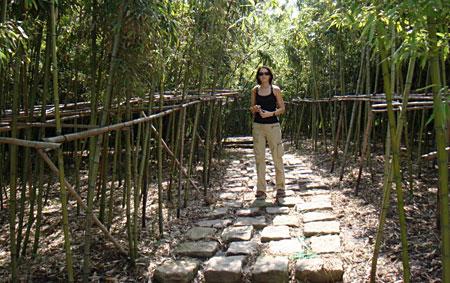 bambusowylas.jpg